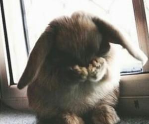 animal, conejito, and cute image