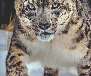 animal, nature, and cat image