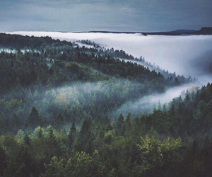 fade, mist, and forest image