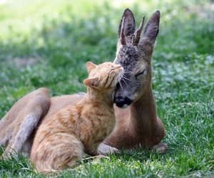 cat, animal, and deer image