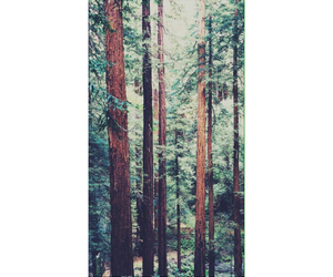 background, woods, and forest image