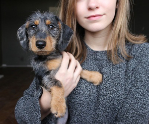 tumblr, cute, and dog image