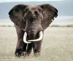 elephants, WWF, and animaux image
