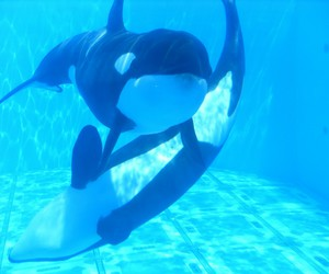 florida, killer whale, and orca image