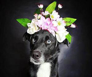 adopt, dog, and flowers image