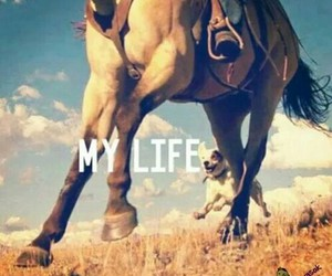 Dream, horse, and life image
