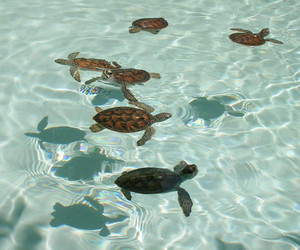turtle, water, and summer image