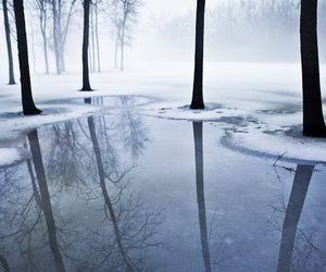winter, forest, and photography image