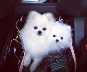 dog, fluffy, and white image