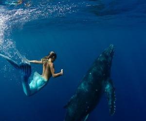 mermaid, ocean, and whale image