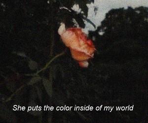 flower, love, and john mayer image