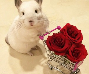 rose, cute, and animal image