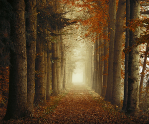 autumn, nature, and path image