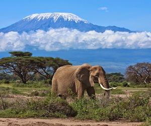elephant, africa, and Kilimanjaro image