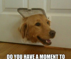 dog, funny, and jesus image
