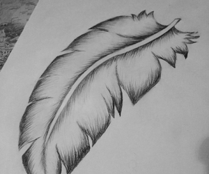 black white, drawing, and feather image
