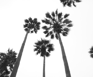 palm trees, black and white, and summer image