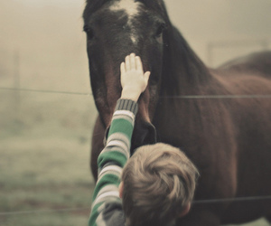 affection, animals, and boy image
