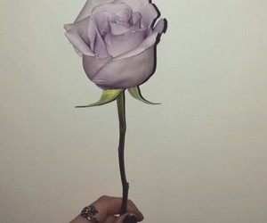 beautiful, day, and rose image