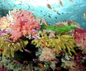 coral reef, landscape, and nature image