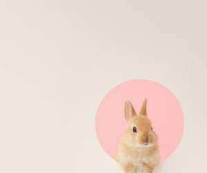 bunny, wallpaper, and cute image