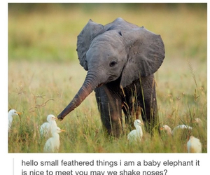 cute, elephant, and baby image