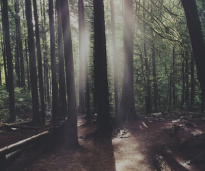 adventure, forest, and happy image