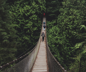 adventure, bridge, and forest image