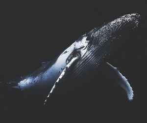 whale, ocean, and animal image