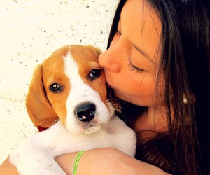 beagle, dog, and mascota image