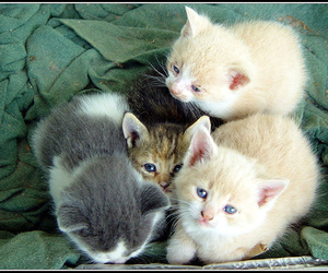 cats and kittens image