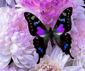 butterfly, flowers, and purple image
