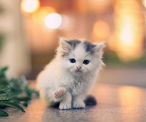adorable, kittie, and kitty image