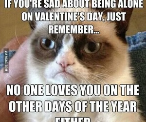 cat, funny, and true image