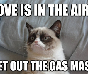 love, grumpy cat, and cat image