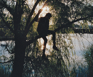 tree, boy, and sun image