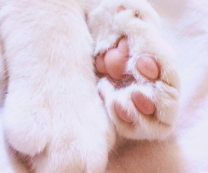 cat, feet, and white image