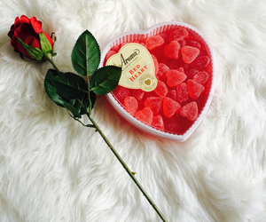 romantic, rose, and love image