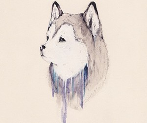 husky, paint, and watercolor image