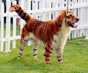 dog, tiger, and animal image