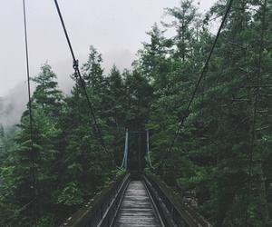 nature, tree, and bridge image