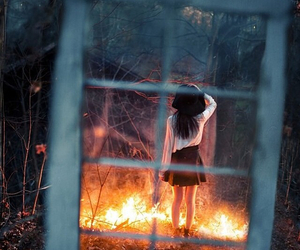 fire, window, and forest image