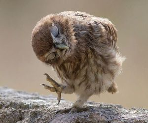 owl, animal, and bird image