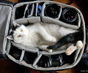 cat, camera, and bag image