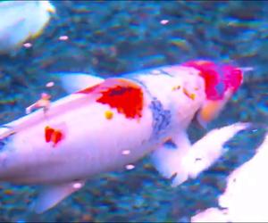 fish, grunge, and koi image