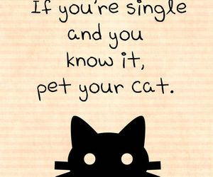 pet, cat, and single image