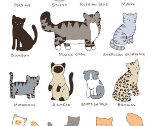 bengal, cats, and nice image