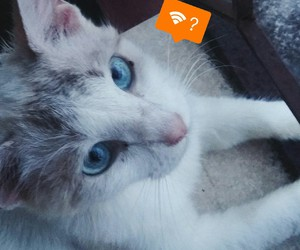 cat and wifi image