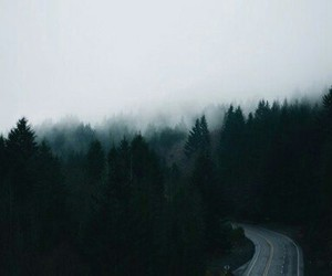 road, fog, and forest image