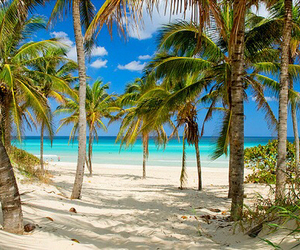beach, beauty, and palm trees image